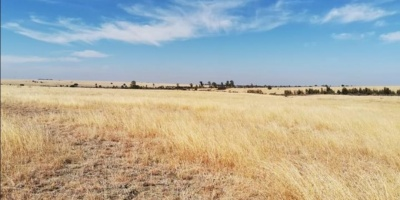 Kroonstad, ,Farm,For Sale,1186
